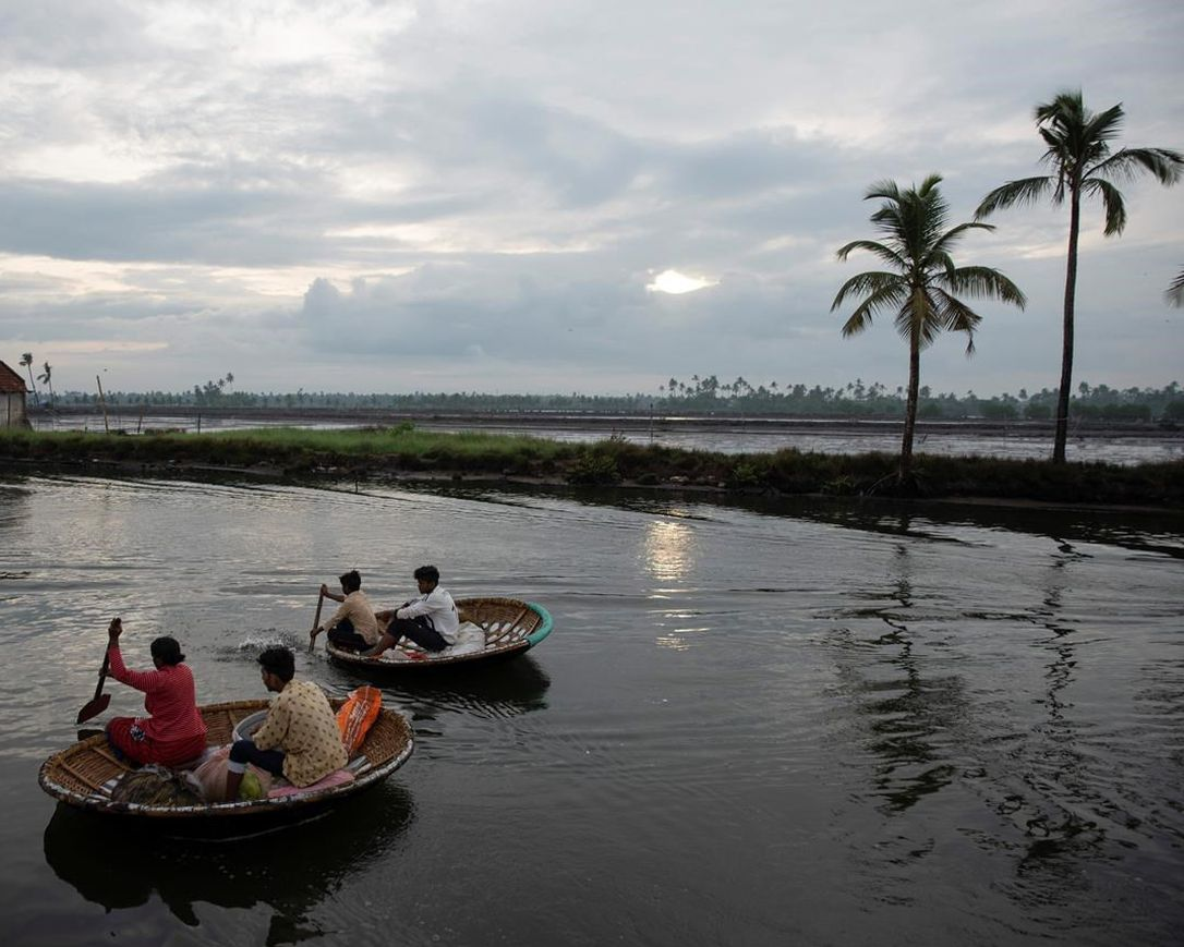Fishermen row their traditional boats as they set out to fish in the morning in Kochi, Kerala state, India, Monday, June 1, 2020.