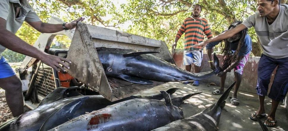 Aumentan las muertes de delfines misteriosos de Mauricio