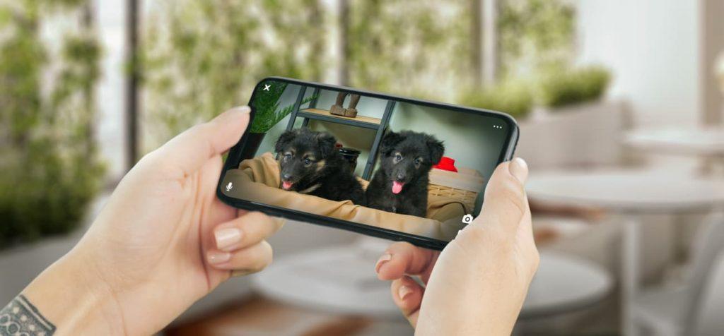 Petcube, cámara pequeña para mascotas realmente barata
