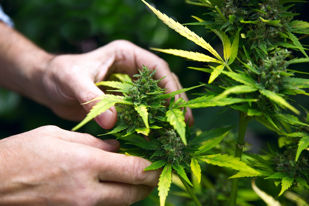 Los jóvenes de la UE beben menos y cambian el tabaco por cannabis: estudio