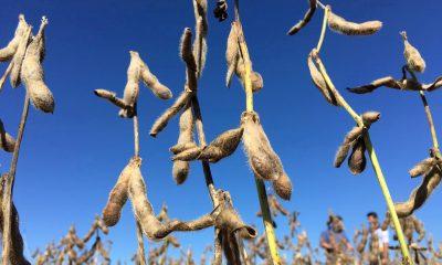 Los productores de soja brasileños prueban la tecnología 5G con equipos de Huawei