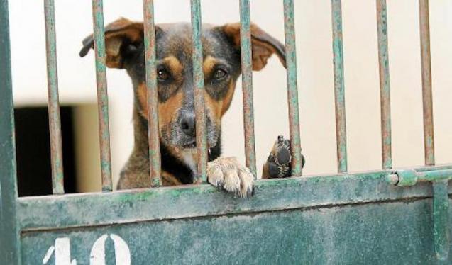 Animal Welfare in Mallorca.